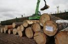 Высотки из дерева разрешат строить в России