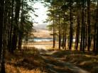 Новосибирская область: земли заказника изъяли из незаконного владения