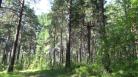 Новосибирск: лесной участок защитили от застройки