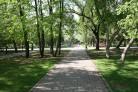 Новосибирск: озеленять город будут по генеральной схеме