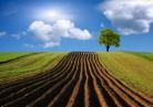 Сельхозземли: ещё 75 тысяч гектаров введут в оборот