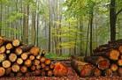 Лесные ресурсы: очереди на древесину