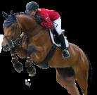 Конной базе – конюшню и манеж