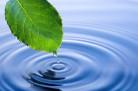 """Нацпроект """"Экология"""": начата очистка водоёмов"""