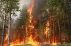 Пожары в Новосибирской области: уничтожены дачи и гектары лесов